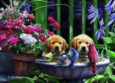 05668 King Puzzel Puppies Drinking Water 1000 Stukjes