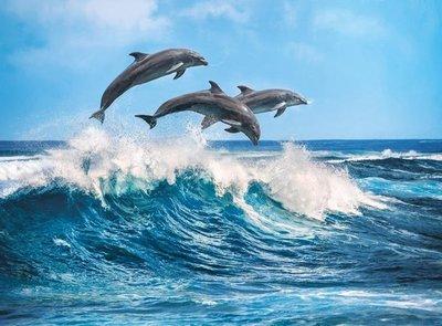 35055 Clementoni Puzzel HQ Collection Dolphins 500 Stukjes